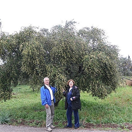 Kontoulis Family Olive Oil
