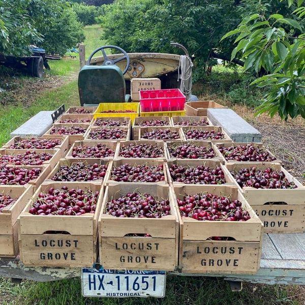 Locust Grove Fruit Farm